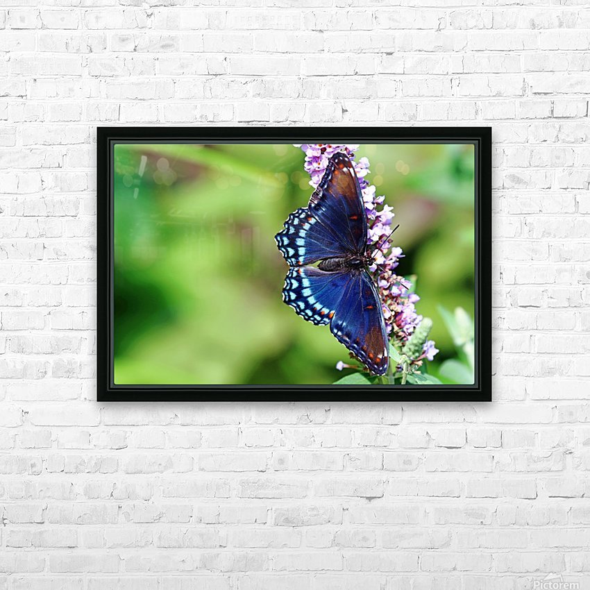 Red Spotted Purple Beauty HD Sublimation Metal print with Decorating Float Frame (BOX)