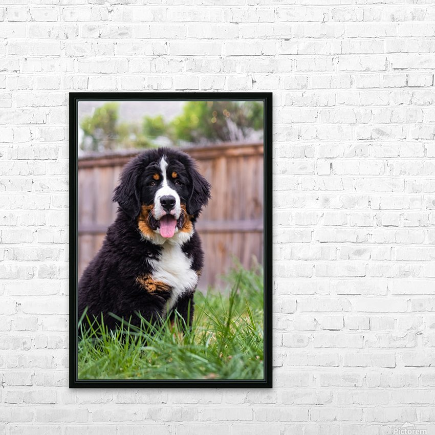 Bernese Mountain Dog Puppy 1 HD Sublimation Metal print with Decorating Float Frame (BOX)