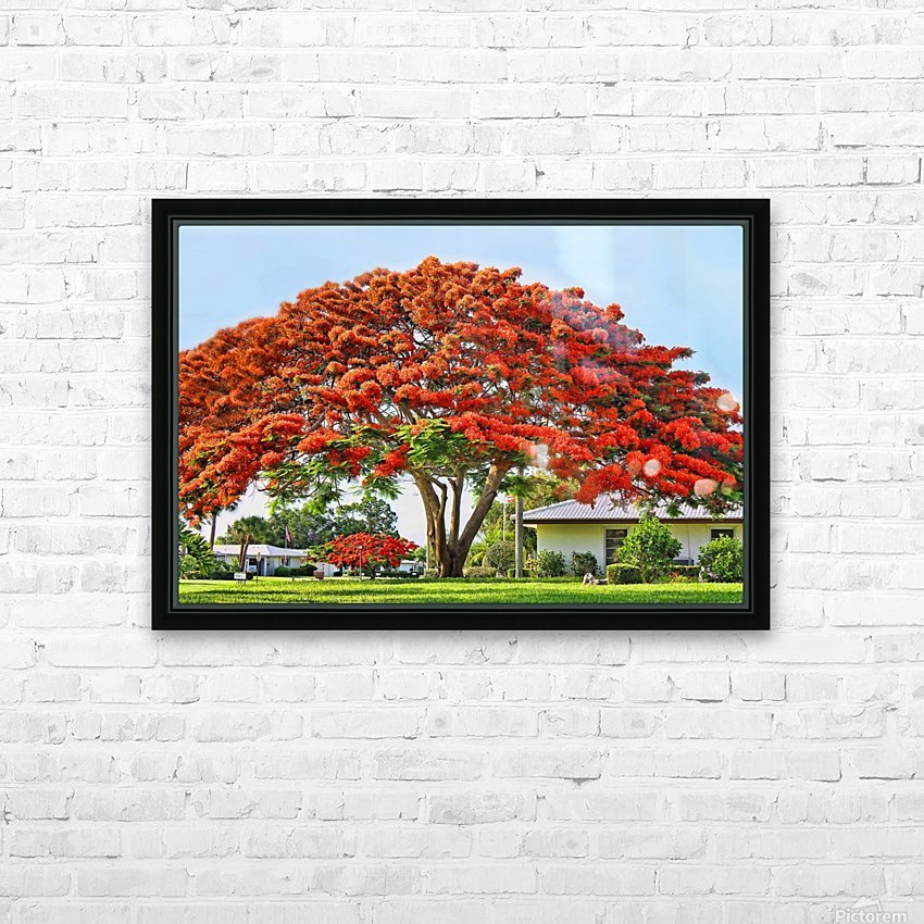 Royal Poinciana Tree HD Sublimation Metal print with Decorating Float Frame (BOX)