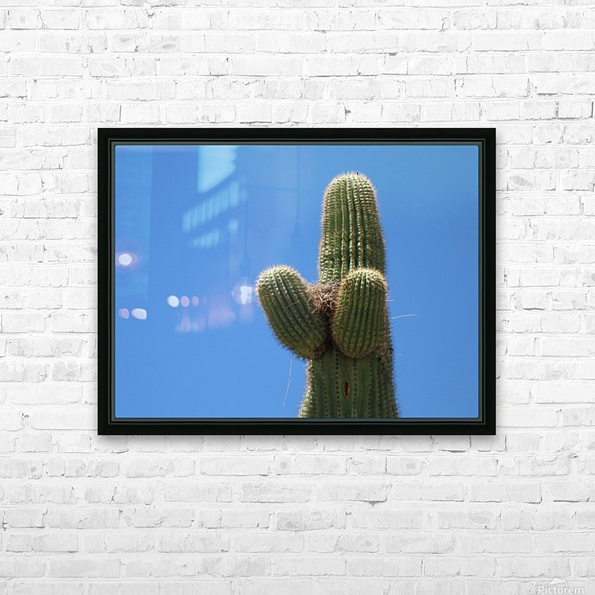 Saguaro Cactus Cradling A Birds Nest Photography HD Sublimation Metal print with Decorating Float Frame (BOX)