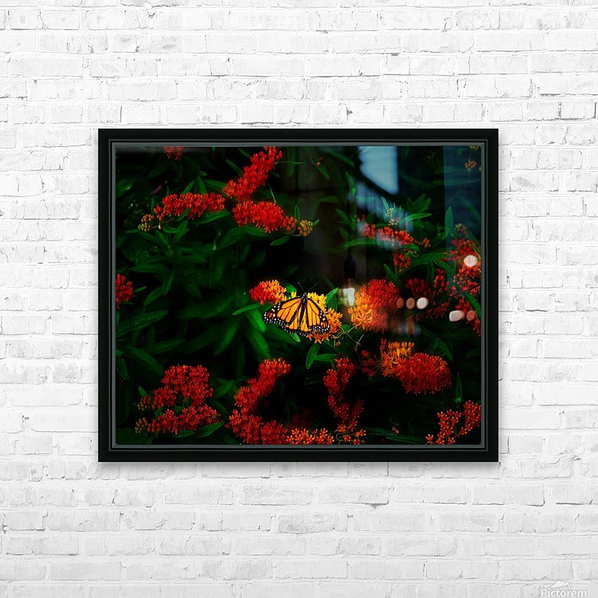 Monarch butterfly HD Sublimation Metal print with Decorating Float Frame (BOX)