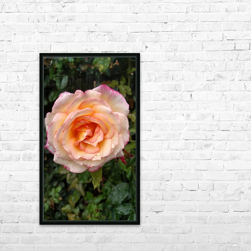 Peach Rose HD Sublimation Metal print with Decorating Float Frame (BOX)