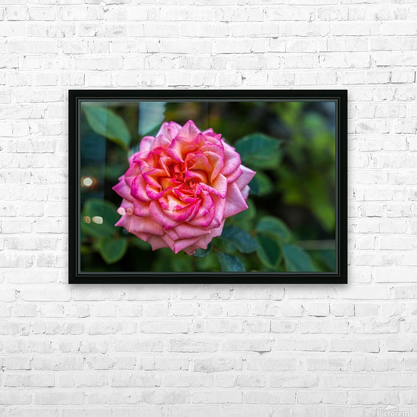 Rose HD Sublimation Metal print with Decorating Float Frame (BOX)