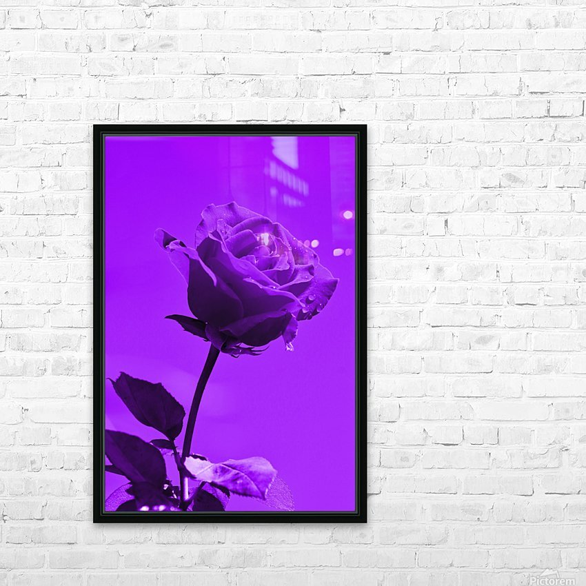 Love Rose purple 8665 HD Sublimation Metal print with Decorating Float Frame (BOX)
