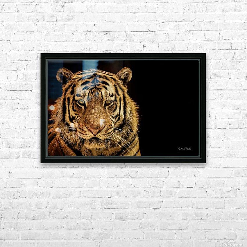 Massive Siberian Amur Tiger  HD Sublimation Metal print with Decorating Float Frame (BOX)