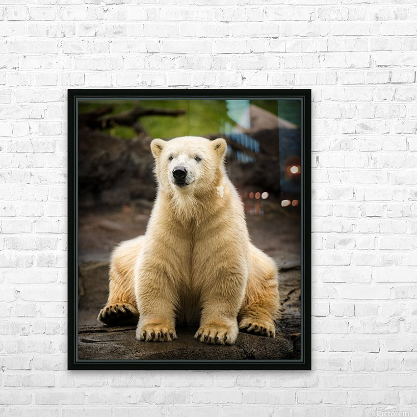 Polar Bear Cub HD Sublimation Metal print with Decorating Float Frame (BOX)