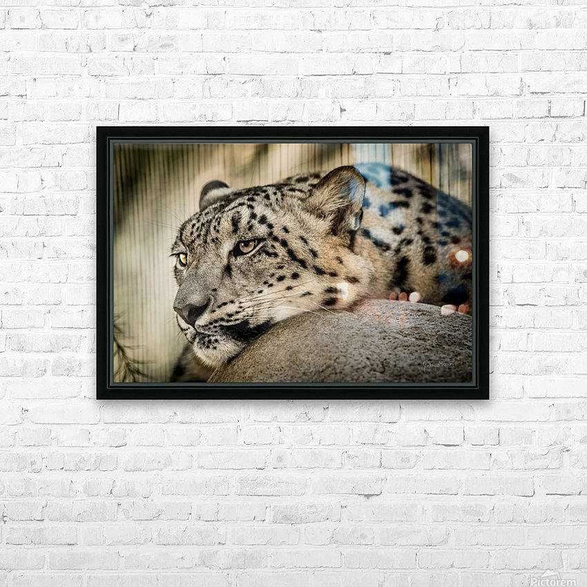 Snow Leopard HD Sublimation Metal print with Decorating Float Frame (BOX)