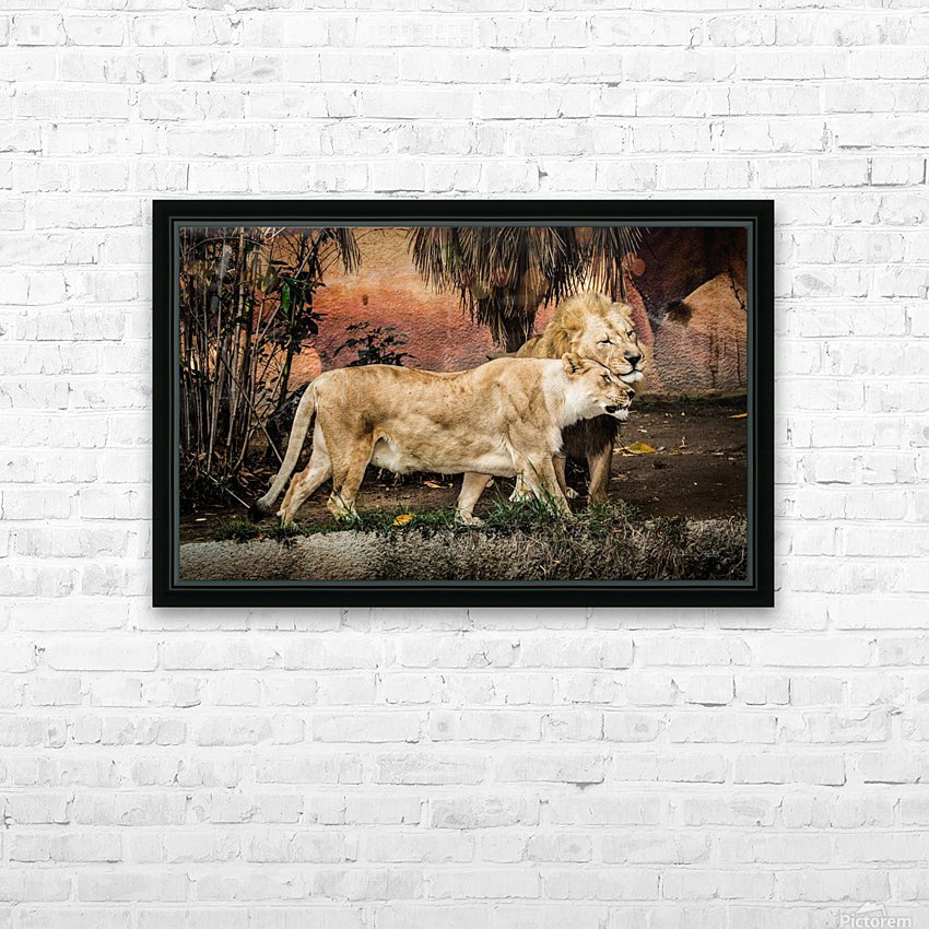 The Loving Lion Couple HD Sublimation Metal print with Decorating Float Frame (BOX)