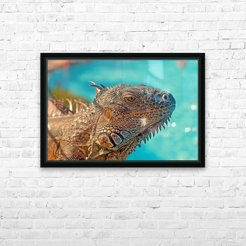 Spiny-Tailed Iguana HD Sublimation Metal print with Decorating Float Frame (BOX)
