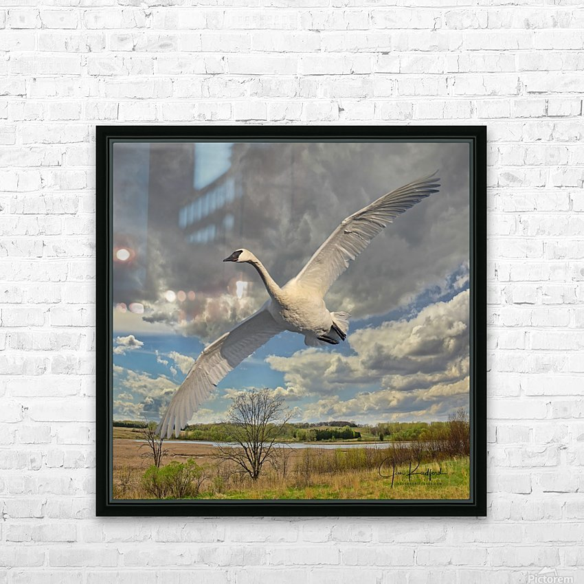 Swan on the Wing HD Sublimation Metal print with Decorating Float Frame (BOX)