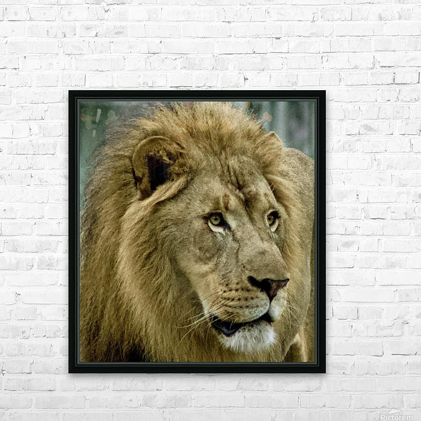 Extreme close up Lion HD Sublimation Metal print with Decorating Float Frame (BOX)