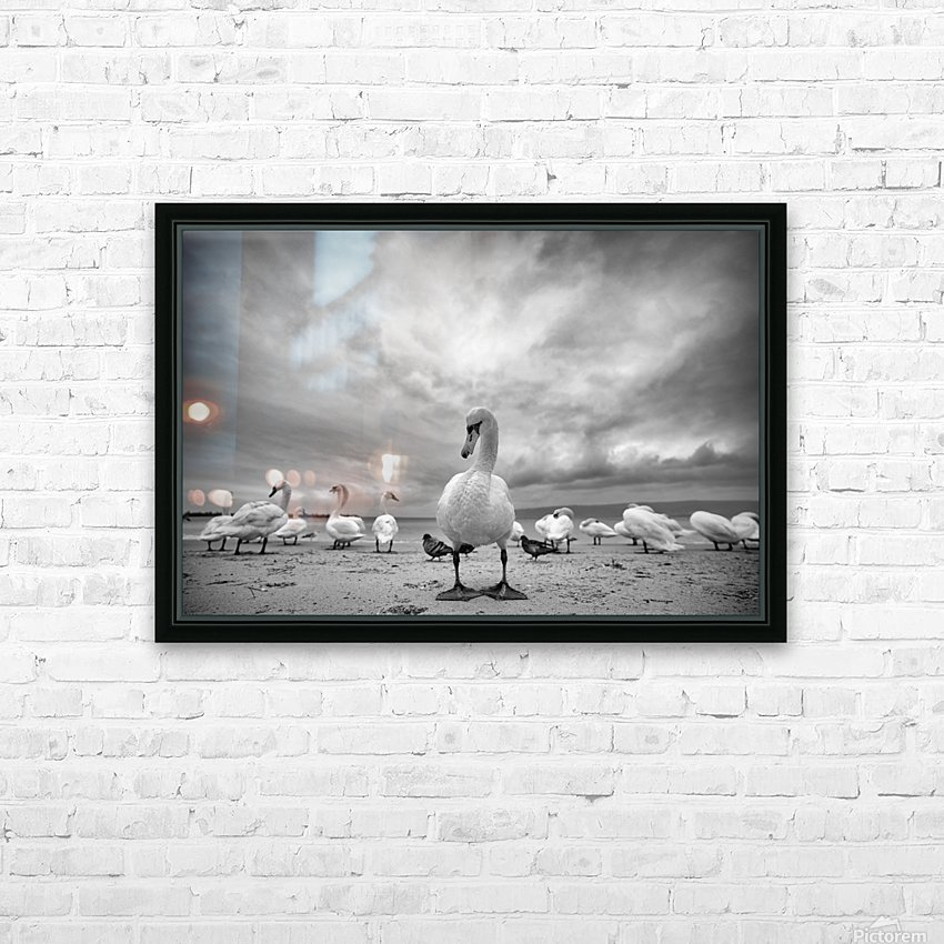 Swans on a winter beach HD Sublimation Metal print with Decorating Float Frame (BOX)