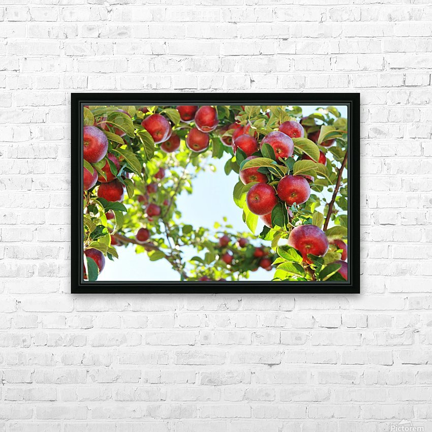 Apples Orchard- Harvest HD Sublimation Metal print with Decorating Float Frame (BOX)
