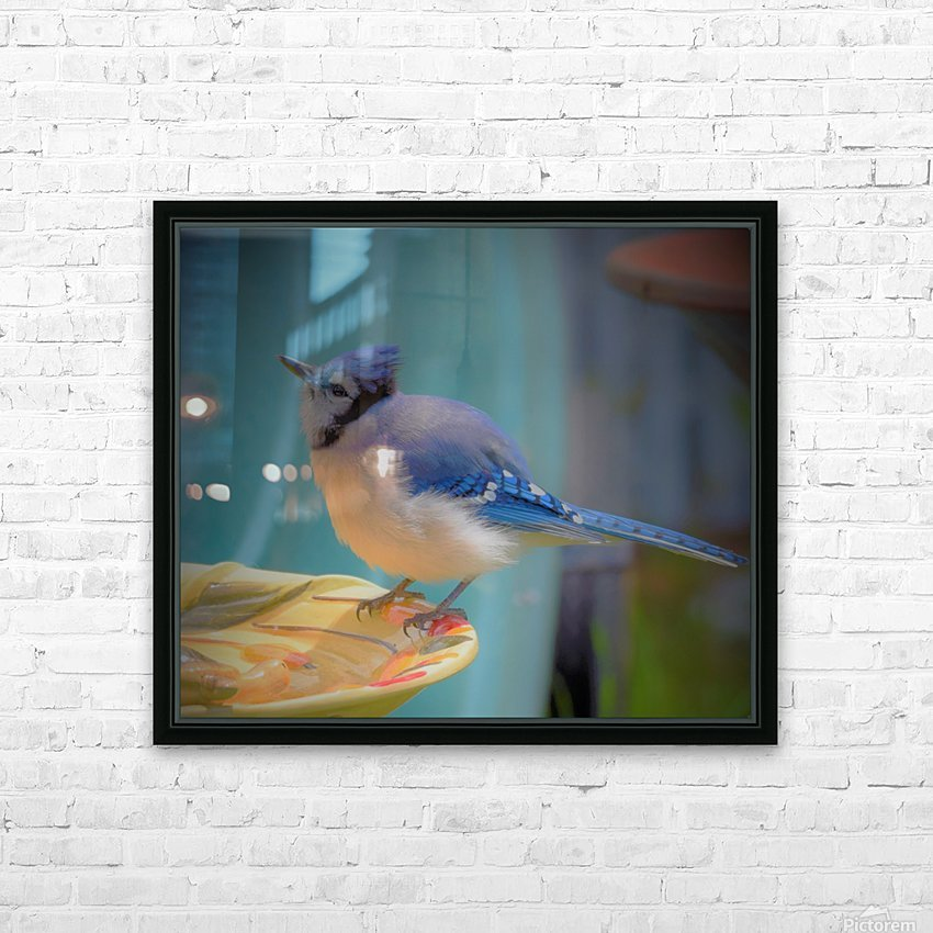 Geai bleu HD Sublimation Metal print with Decorating Float Frame (BOX)