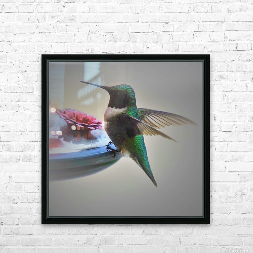 Colibris HD Sublimation Metal print with Decorating Float Frame (BOX)