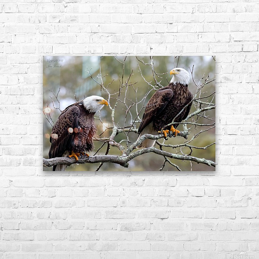 Bald Eagles HD Sublimation Metal print with Decorating Float Frame (BOX)