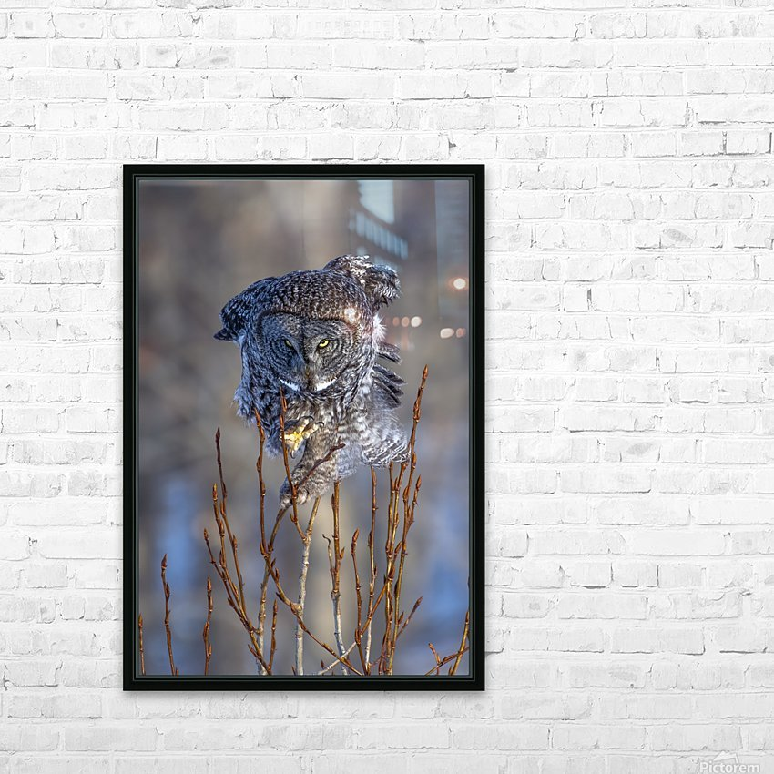 Great Grey Owl - Hanging on HD Sublimation Metal print with Decorating Float Frame (BOX)