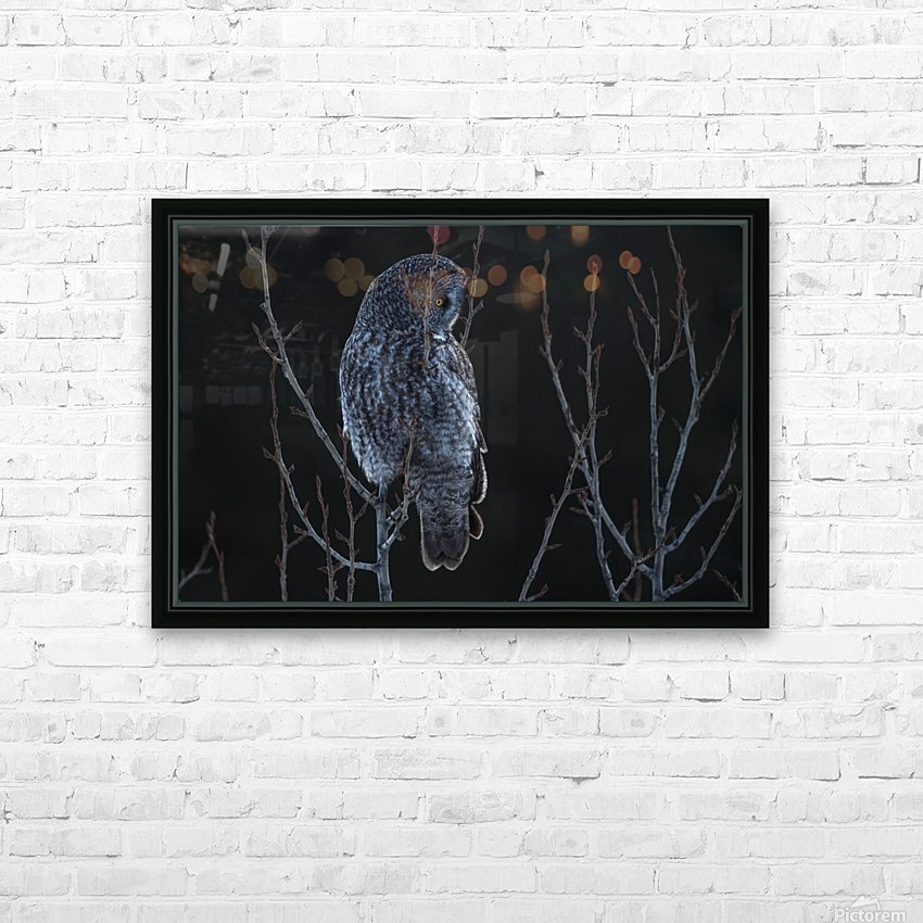 Great Grey Owl - After sunset HD Sublimation Metal print with Decorating Float Frame (BOX)