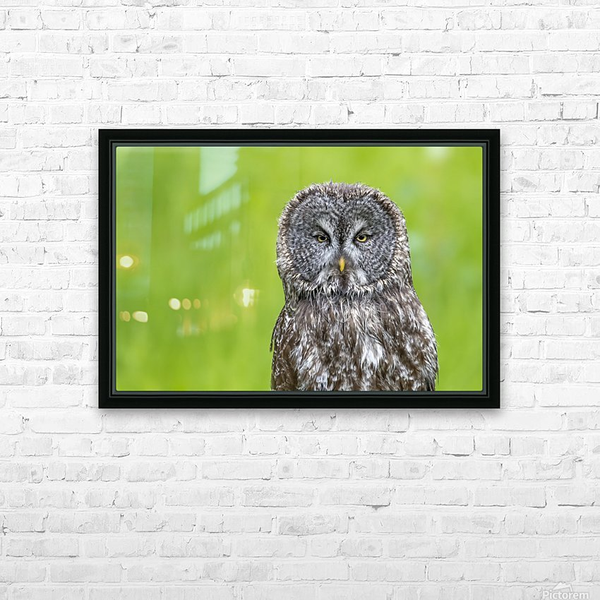 Great Grey Owl - Grey on Green HD Sublimation Metal print with Decorating Float Frame (BOX)