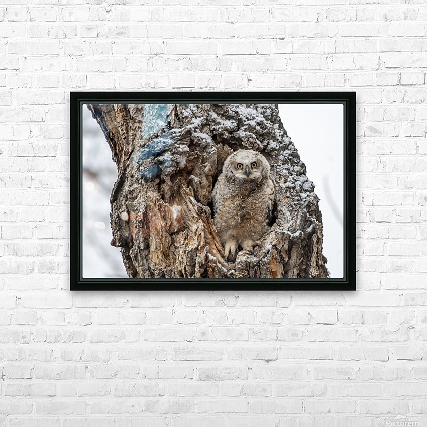 Great Horned Owlet - Can I come out yet HD Sublimation Metal print with Decorating Float Frame (BOX)