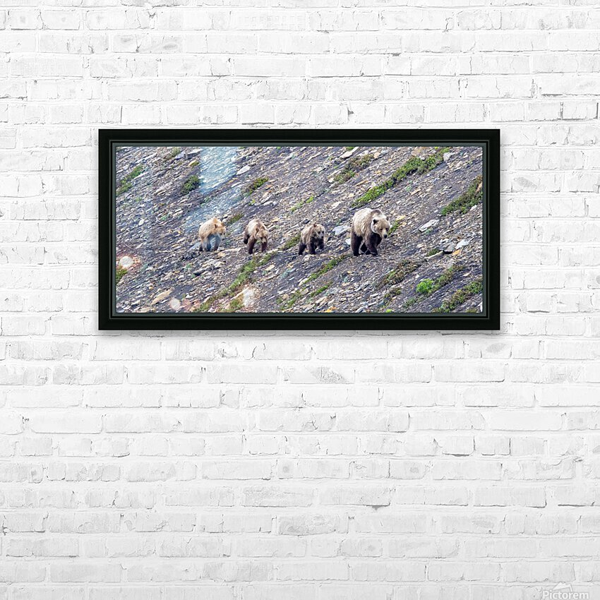 Grizzly Bear Family - Walk this way. HD Sublimation Metal print with Decorating Float Frame (BOX)