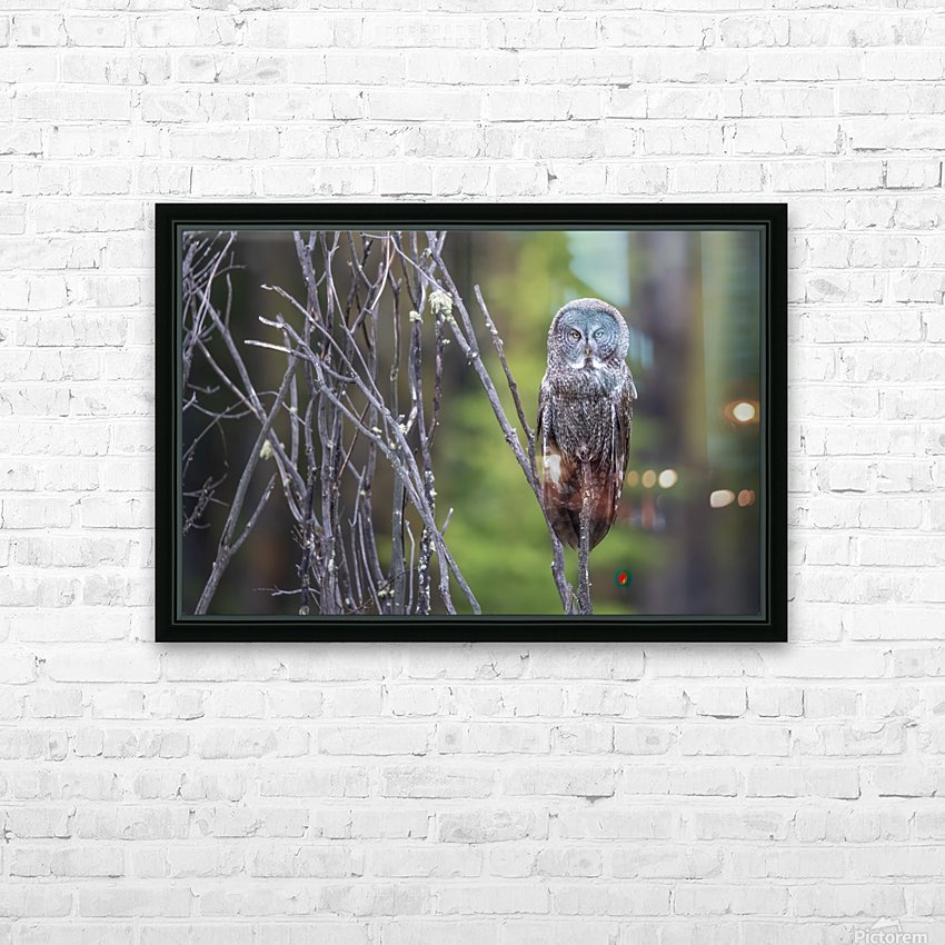 Great Grey Owl - Portait HD Sublimation Metal print with Decorating Float Frame (BOX)