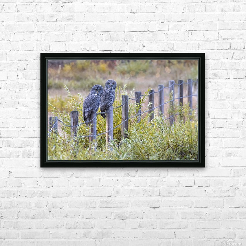 Seeing double - Great Grey Owl HD Sublimation Metal print with Decorating Float Frame (BOX)