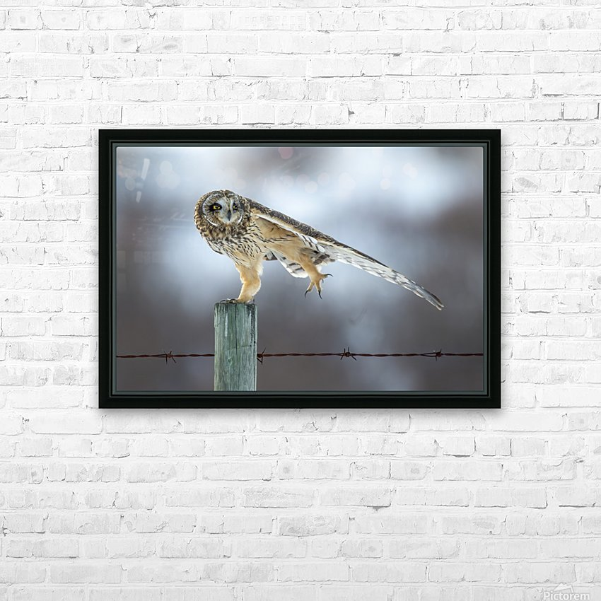 Short Eared Owl - Big Stretch HD Sublimation Metal print with Decorating Float Frame (BOX)