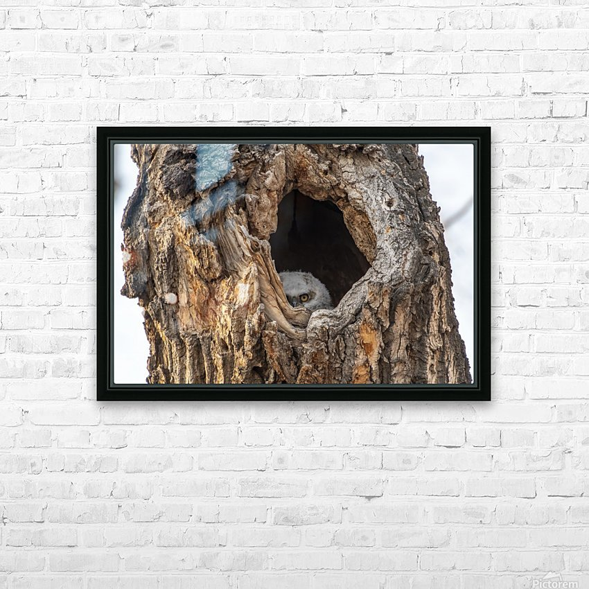 Great Horned Owl - Peek a boo HD Sublimation Metal print with Decorating Float Frame (BOX)