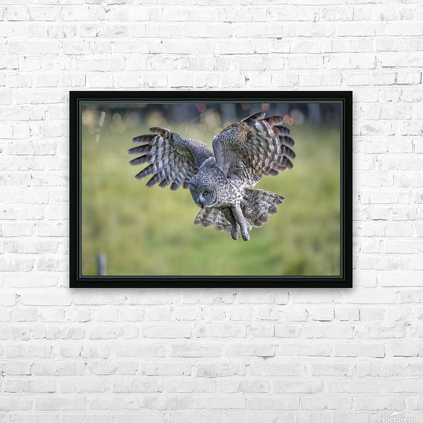 Great Grey Owl - Incoming HD Sublimation Metal print with Decorating Float Frame (BOX)