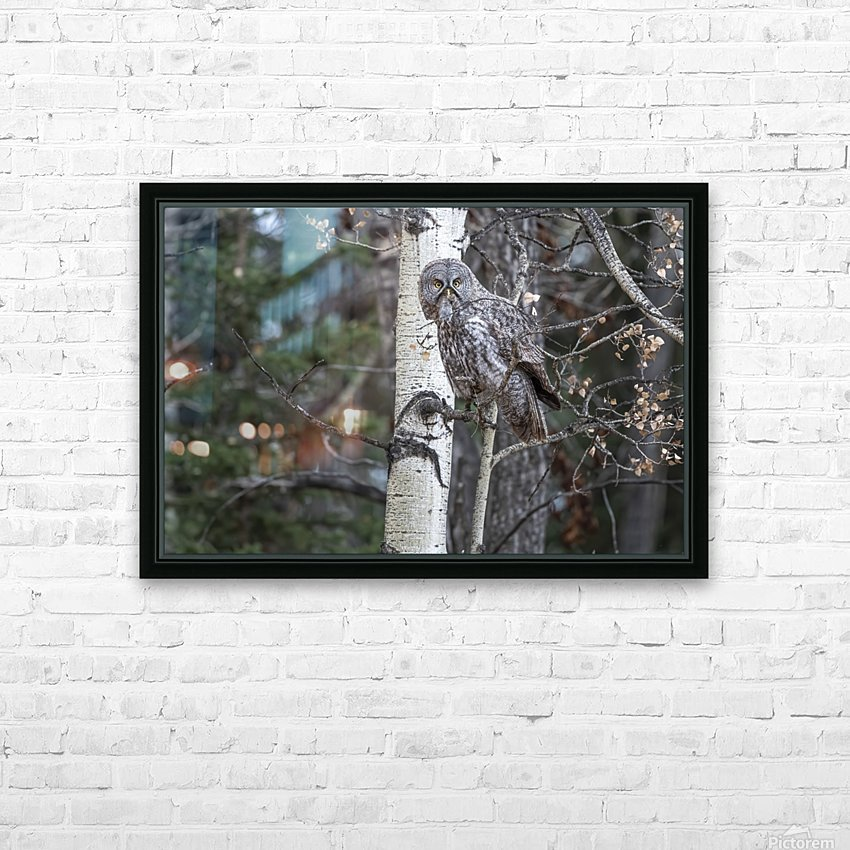 Great Grey Owl - Its Just a Snack HD Sublimation Metal print with Decorating Float Frame (BOX)