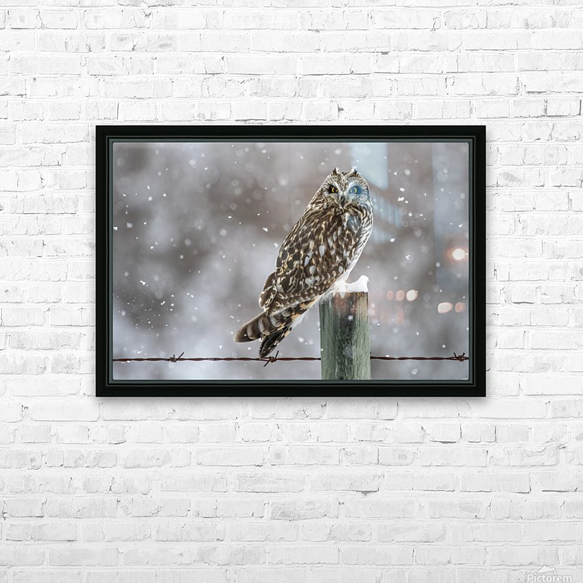 Short Eared Owl - Snow Storm HD Sublimation Metal print with Decorating Float Frame (BOX)