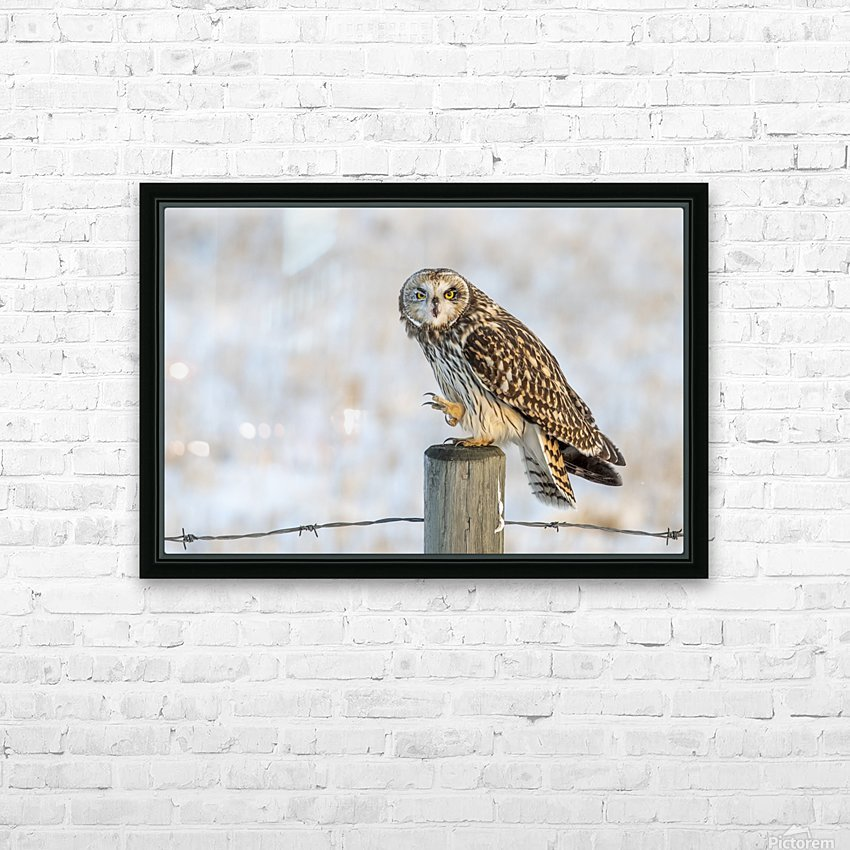 Short Eared Owl - Just an Itch HD Sublimation Metal print with Decorating Float Frame (BOX)