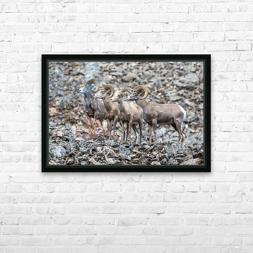 Big Horn Sheep - Family Portrait HD Sublimation Metal print with Decorating Float Frame (BOX)