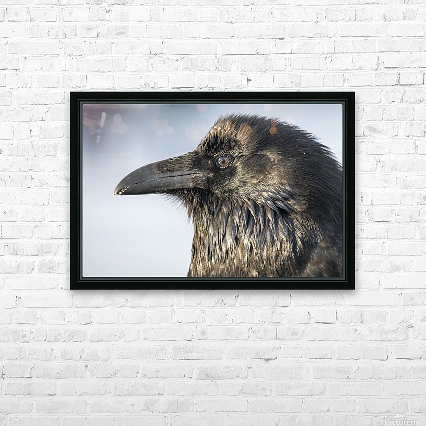 Raven - Up Close HD Sublimation Metal print with Decorating Float Frame (BOX)