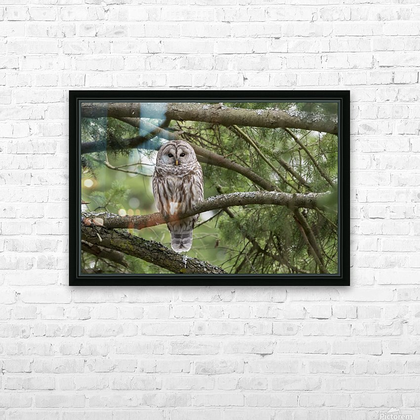 Barred Owl - Eye Contact HD Sublimation Metal print with Decorating Float Frame (BOX)