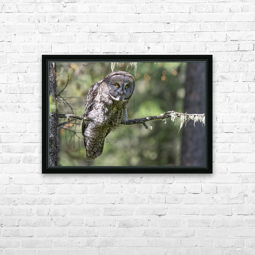 Great Grey Owl - Hunting mode HD Sublimation Metal print with Decorating Float Frame (BOX)