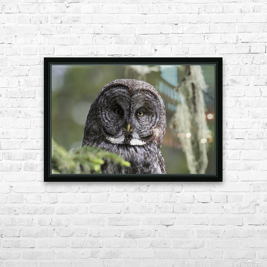 Great Grey Owl - Eye to Eye HD Sublimation Metal print with Decorating Float Frame (BOX)