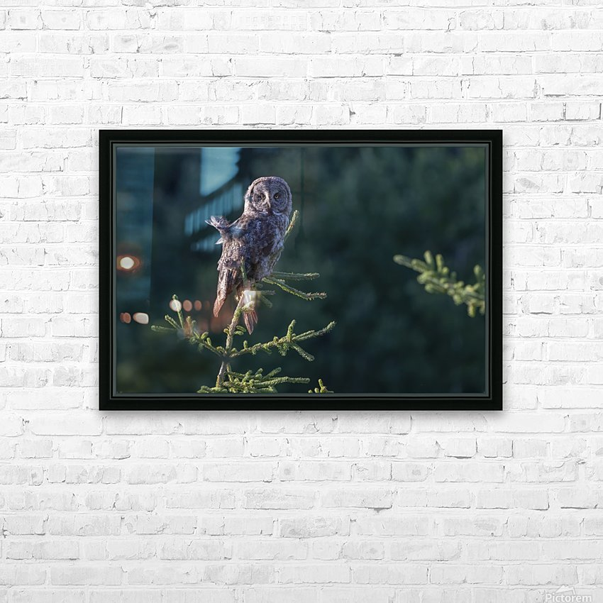 Great Grey Owl - Tree Top Hunting HD Sublimation Metal print with Decorating Float Frame (BOX)