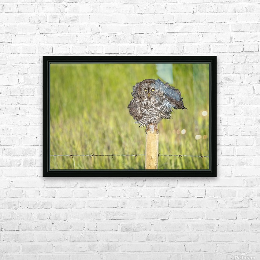 Great Grey Owl - Shaking It Out HD Sublimation Metal print with Decorating Float Frame (BOX)