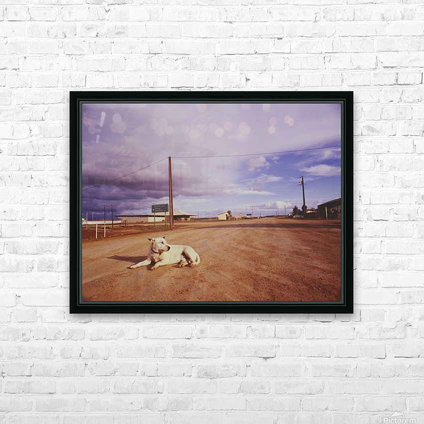 Lone dog in Outback town Australia HD Sublimation Metal print with Decorating Float Frame (BOX)