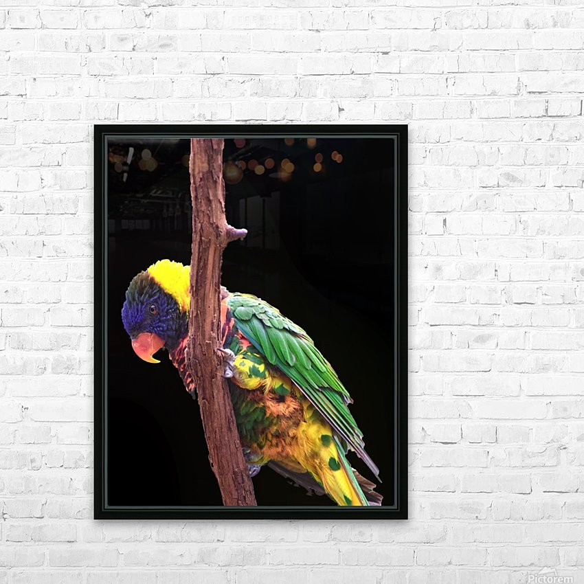 Colorful Bird on branch HD Sublimation Metal print with Decorating Float Frame (BOX)