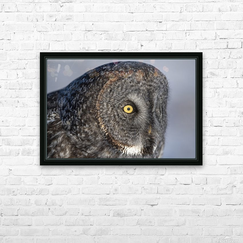 Great Grey Owl up Close HD Sublimation Metal print with Decorating Float Frame (BOX)
