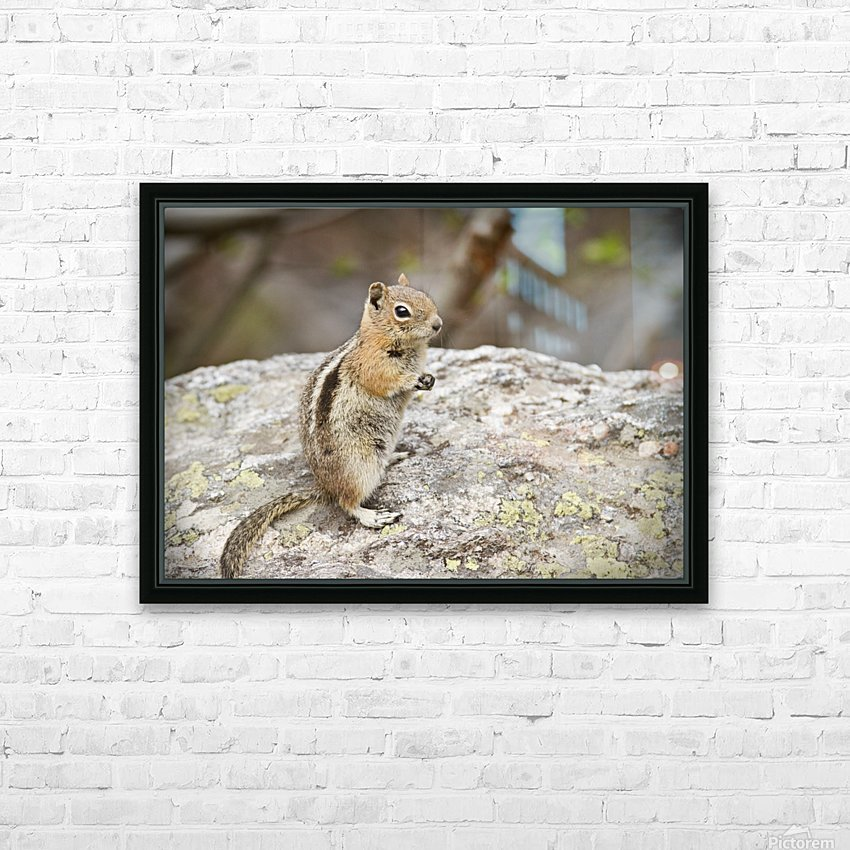 Chipmunk 2 HD Sublimation Metal print with Decorating Float Frame (BOX)