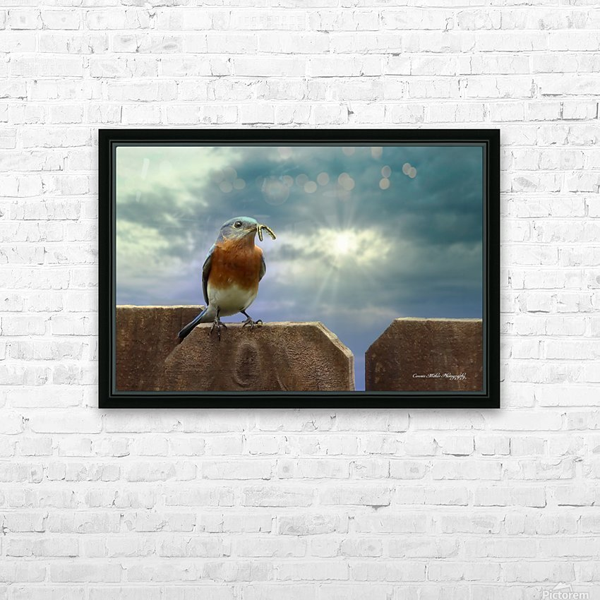 Bluebird in Sun HD Sublimation Metal print with Decorating Float Frame (BOX)