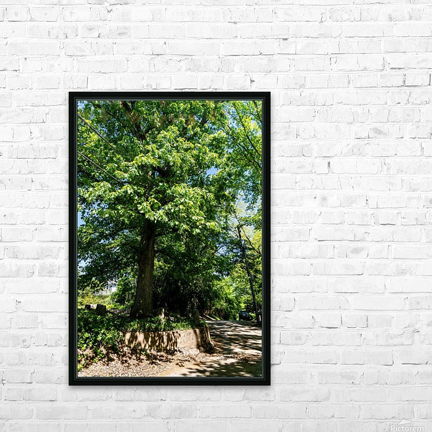 Tree Than Owns Itself   Athens GA 06567 HD Sublimation Metal print with Decorating Float Frame (BOX)