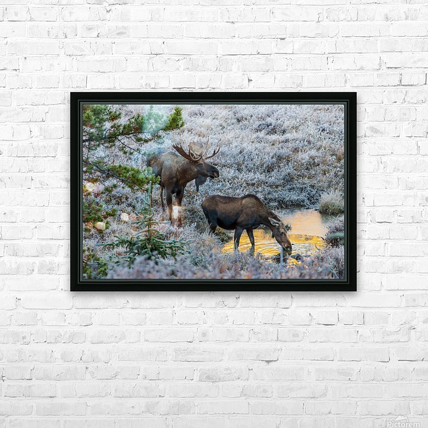 Moose On Golden Pond HD Sublimation Metal print with Decorating Float Frame (BOX)