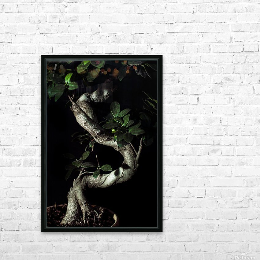 old bonsai black background HD Sublimation Metal print with Decorating Float Frame (BOX)