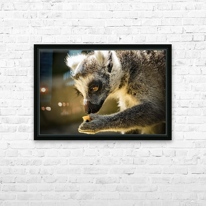 Ring-tailed lemur HD Sublimation Metal print with Decorating Float Frame (BOX)
