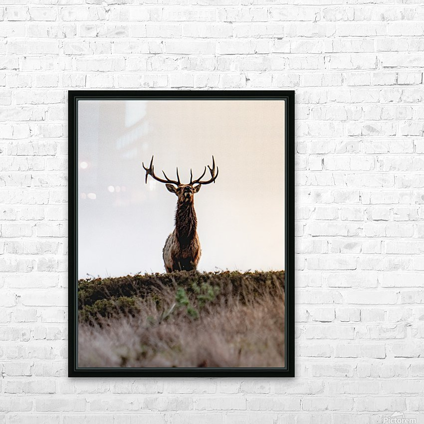 Tule Elk On Top Of A Hill HD Sublimation Metal print with Decorating Float Frame (BOX)